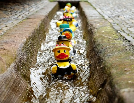 Finally Get Your Ducks In A Row