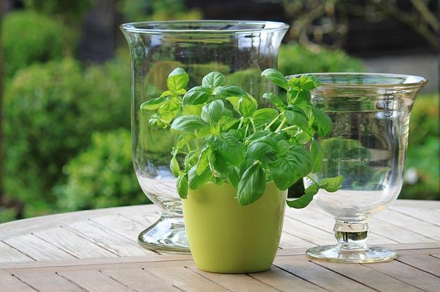 Planting An Indoor Garden