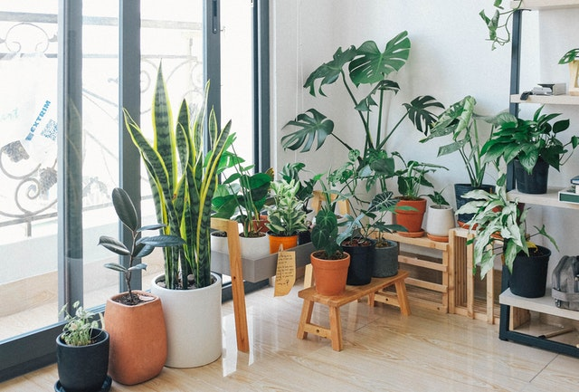 How To Make Your Houseplants Look Their Best