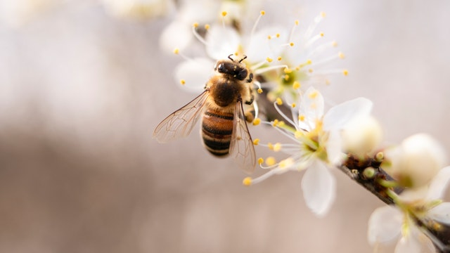 Bee's Essential Role In The Circle Of Life